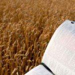 O adubo que fez crescer a semente da Bíblia