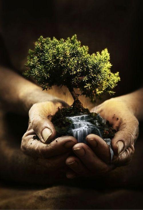 Papa: preservar a Criação é a tarefa dos cristãos, não só dos ecologistas
